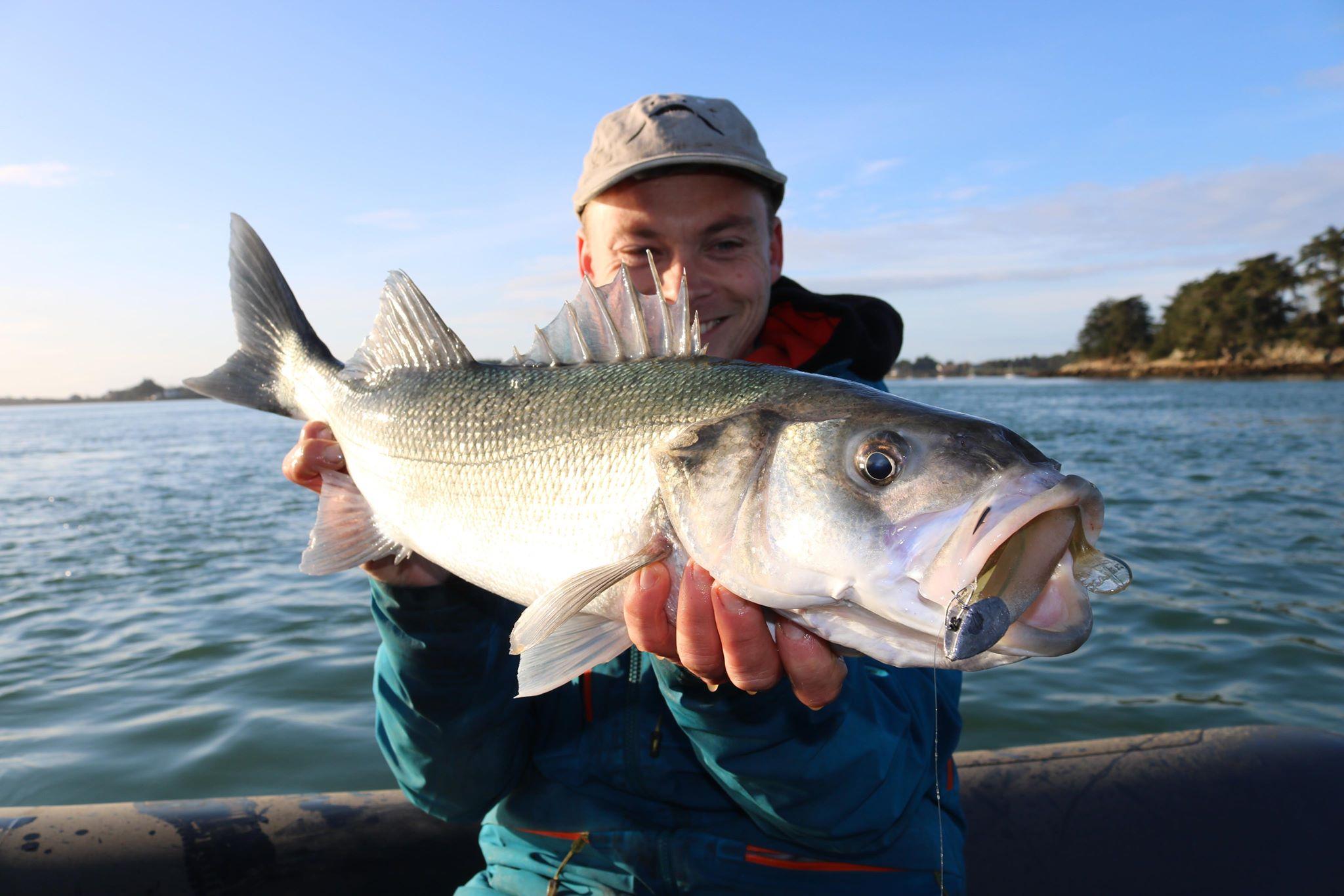 peche au bar labrax lurattak hot rod intuition peche golfe du morbihan gros bar bretagne poisson meilleur leurre de peche relax